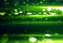 核黄素测试发酵罐清洗前后对比效果检验